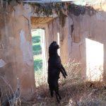 Reabren el caso del perro ahorcado en Jódar tras el recurso de Galgos del Sur